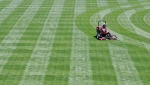 large_2009-06-23-Alliance-Stadium-grass