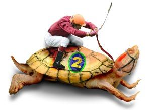 Turtle_Racing1