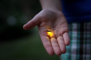 firefly-by-jessica-lucia-cc