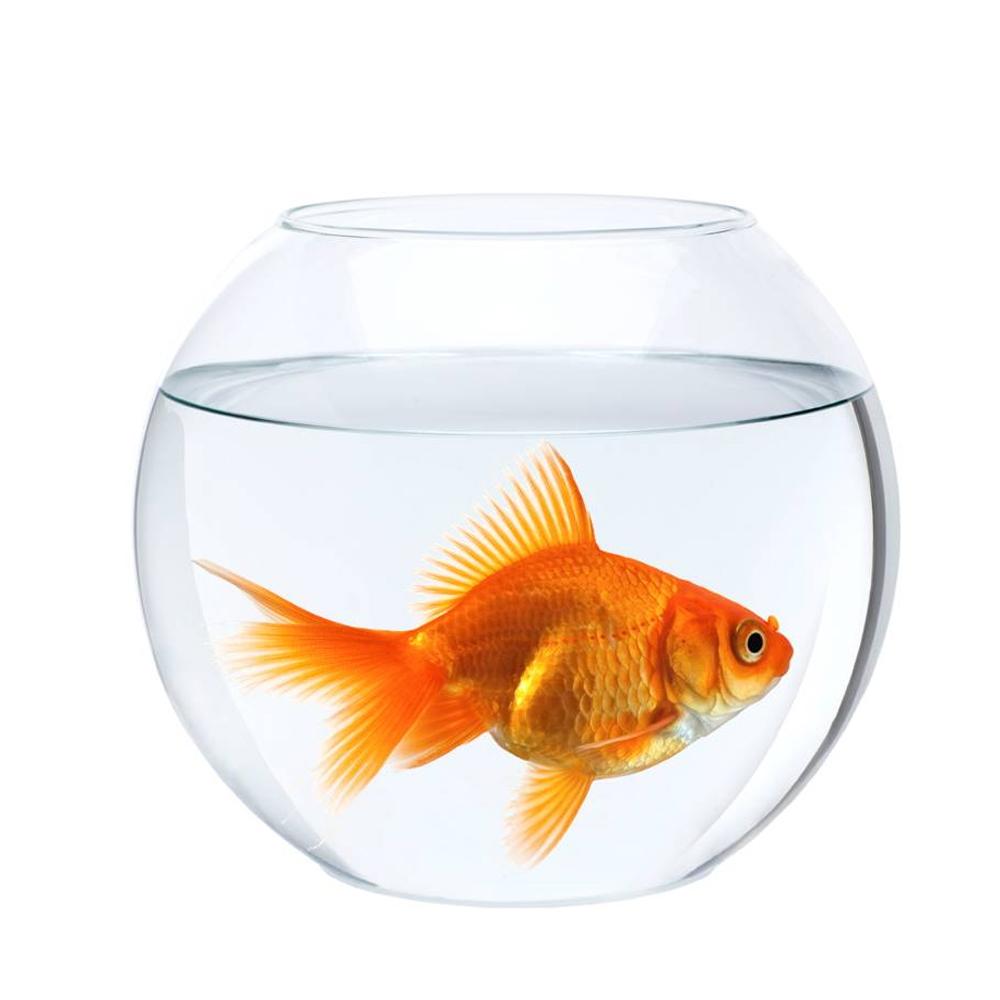 fish-bowl-small-size